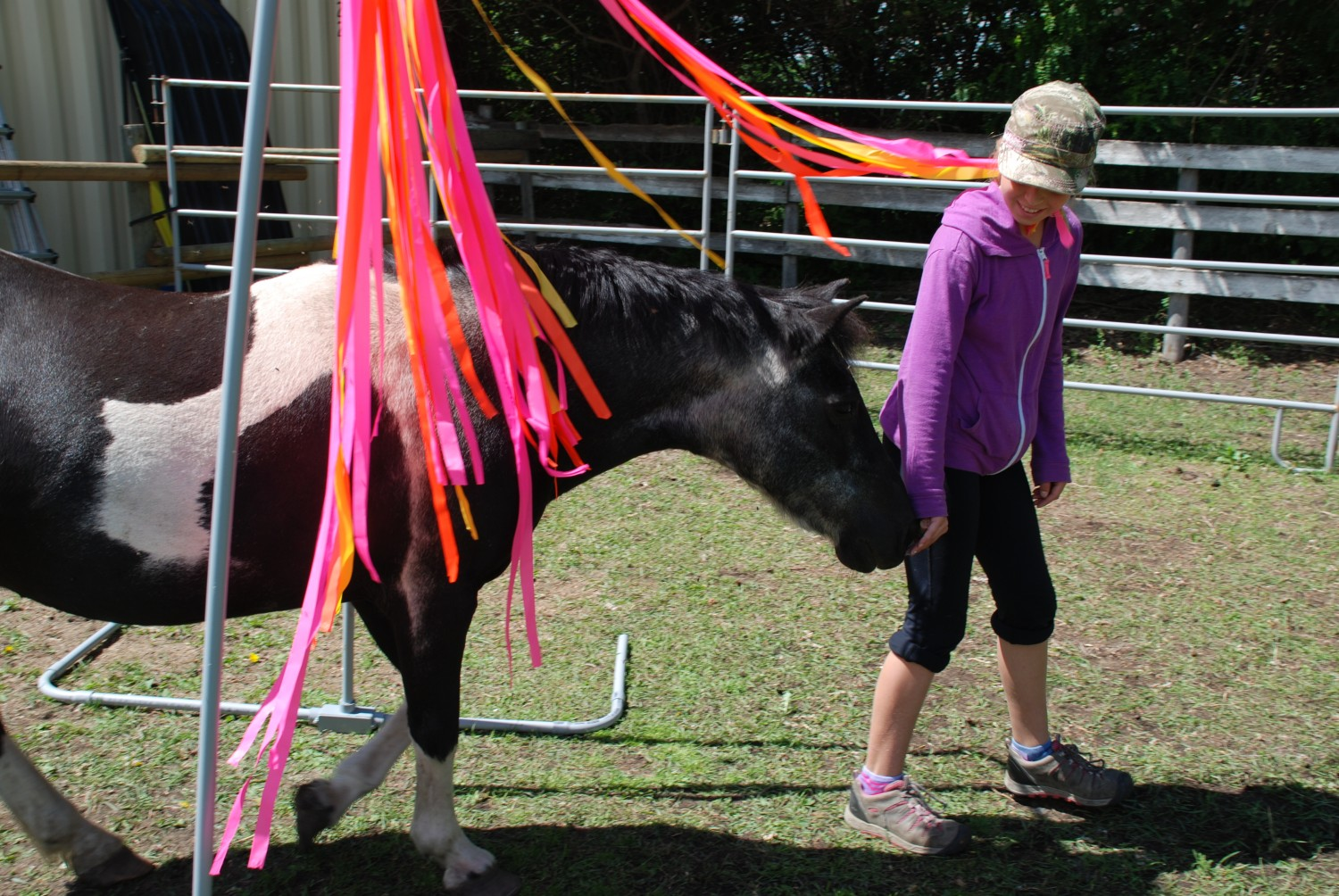 Animal & Equine-Assisted Learning